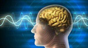 دماغ وأعصاب